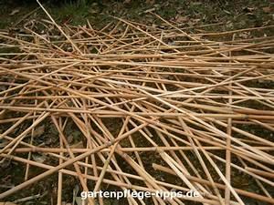 Bambus Vernichten Tipps : unterscheidungsmerkmale von schilf und bambus ~ Whattoseeinmadrid.com Haus und Dekorationen