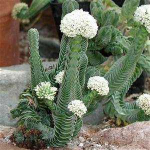 Euphorbia Trigona Vermehren : sukkulenten arten bilder sukkulenten arten die sch nsten kurz vorgestellt sukkulenten arten ~ Orissabook.com Haus und Dekorationen