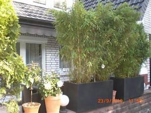 Bambus Zurückschneiden Frühjahr : bambus fargesia fragen bilder pflanz und pflegeanleitungen rund um das thema gartenpflanzen ~ Whattoseeinmadrid.com Haus und Dekorationen
