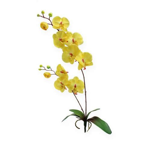 kaffeesatz als dünger für orchideen k 252 nstliche orchidee gelb 68cm kaufen in schweiz