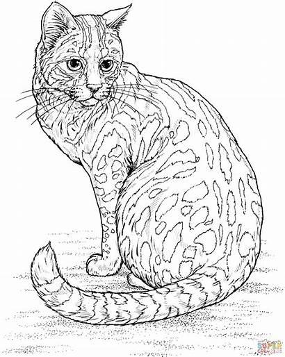 Coloring Cat Colorear Dibujos Skip Leopard