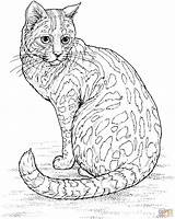 Cat Coloring Pages Leopard Printable Tablets Ipad Compatible Android Version sketch template