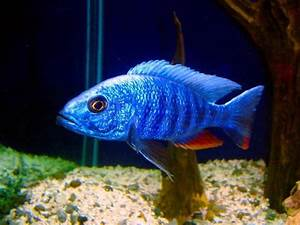 17 Best images about Fish that I have on Pinterest ...