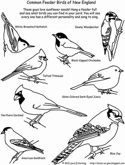 Birds Coloring Bird Pages Printable Feeder England