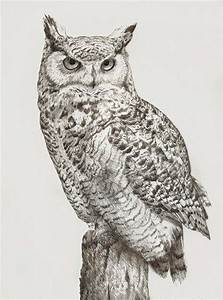 Horned Owl clipart pencil drawing - Pencil and in color ...