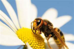 Was Wespen Nicht Mögen : wespen vertreiben diese pflanzen helfen ~ Markanthonyermac.com Haus und Dekorationen