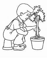 Coloring Tree Plant Arbor Trees Watering Water Colorear Clipart Flowers Ausmalbilder Planting Clip Dibujos Garden Malvorlagen Study Olphreunion Library Kinder sketch template