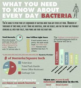 Bacteria In Our Daily Life  Infographic