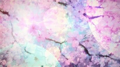 Anime Scenery Gifs Cherry Blossom Aesthetic Petals