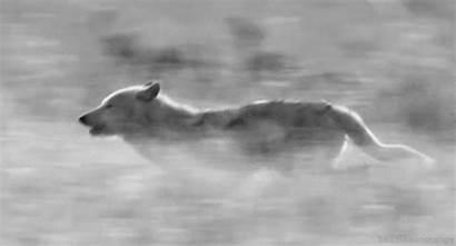 Werewolves Werewolf Wolf Gifs Wolves Animal