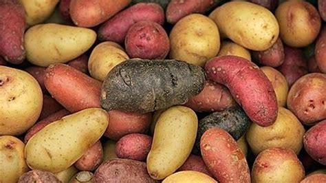 how to season potatoes farmers market report new potatoes are in season here are 9 recipes la times