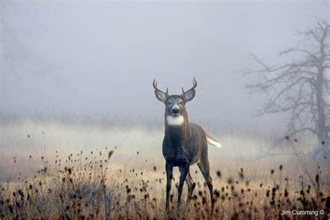 canadian nature photographer  foggy morning