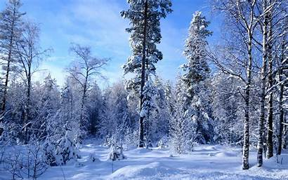 Forest Winter Snow Background Tree