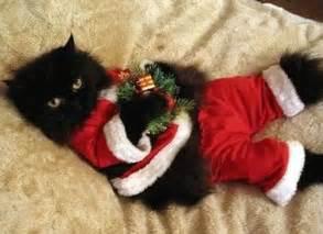 santa cat cats a a day