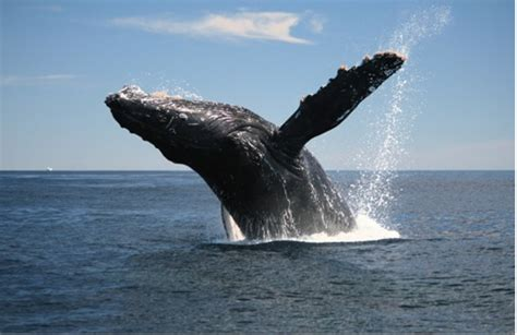 whales whale waves rogue hidden dangers containers unknown globe