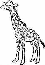 Giraffe Coloring Animals Pattern Printable sketch template