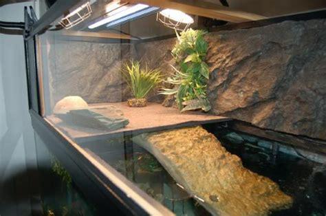 eared slider tank 25 best ideas about aquatic turtles on pinterest water turtles tortoise turtle and turtles