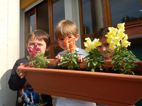 elaborati amici  fiore la nostra scuola  fiore