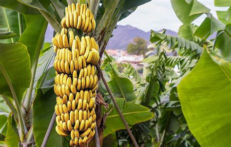 13 Foods That Have More Potassium Than A Banana | Prevention