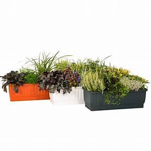 Immergrüne Pflanzen Für Balkonkasten : balkonkasten venezia gro terracotta online kaufen bei g rtner p tschke ~ Markanthonyermac.com Haus und Dekorationen