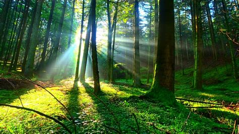 amazing pictures deep   forest