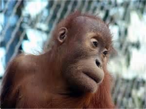 lista las  principales especies en peligro de extincion