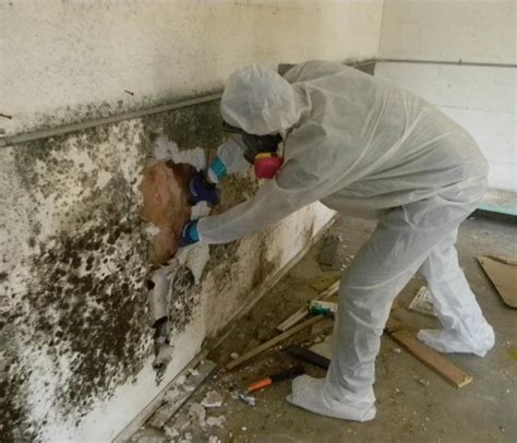 Tips For Detecting Mold In Your Home  Servpro Of Palm Desert