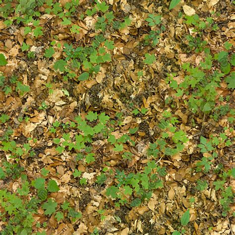 jungle floor texture jungle floor texture 28 images forest floor texture by olafthemediocre on deviantart