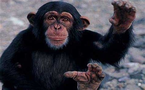 chimpanzee natures wonderland jewish kids