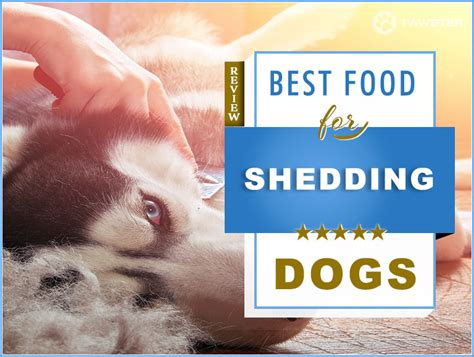 food  shedding dogs   guide