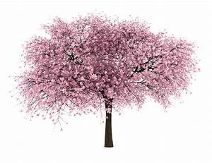 20 Tree Png Images  Free Cutouts  For Architecture