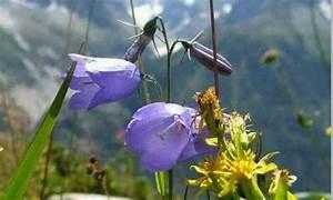 Puzzle En Ligne Adulte : puzzle gratuit fleurs de montagne 4061 par tita85 ~ Dailycaller-alerts.com Idées de Décoration