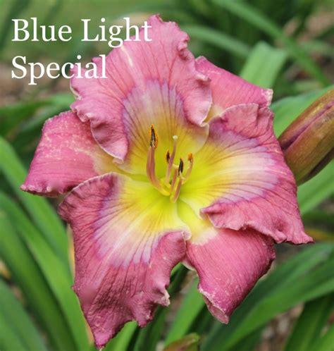 blue light special blue light special