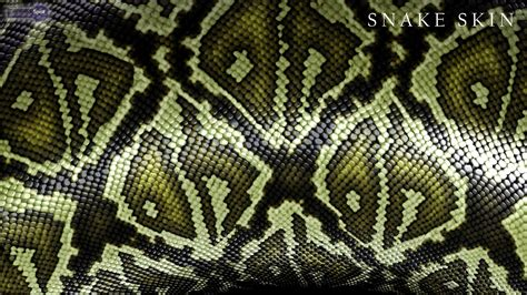 Animal Skin Wallpaper - snake skin wallpaper hd