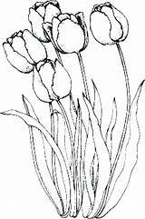 Coloring Tulips Holland Parrot Tulip Pages Flowers Lovely Peony Flower Drawings Drawing Line Embroidery Kidsplaycolor Painting Outline Abstract Sketches Printable sketch template