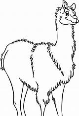 Llama Coloring Pages Drawing Outline Clip Clipart Alpaca Cliparts Clipartbest Getdrawings Mama Animal Library sketch template