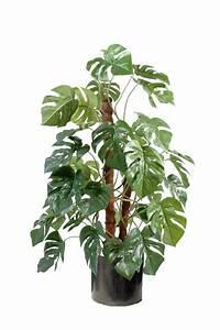 Plante Tropicale D Intérieur : plante tropicale interieur ~ Melissatoandfro.com Idées de Décoration