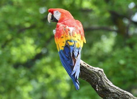 pippis papagei rosalinde soll eingeschlaefert werden