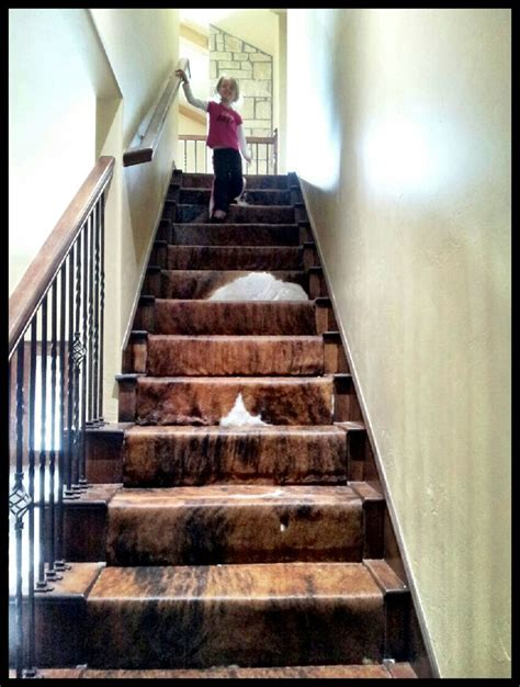 Cowhide Runner by Cowhide Stair Runner This Is Amazing For The Home