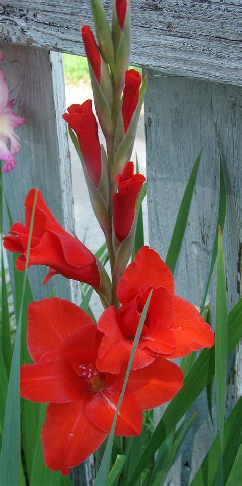 พืชไม้ดอก, ดอกไม้, เบ่งบาน, ธรรมชาติ, กลีบดอกไม้, ปลูก ...