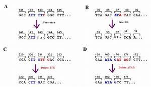 Frameshift mutation - Wikipedia