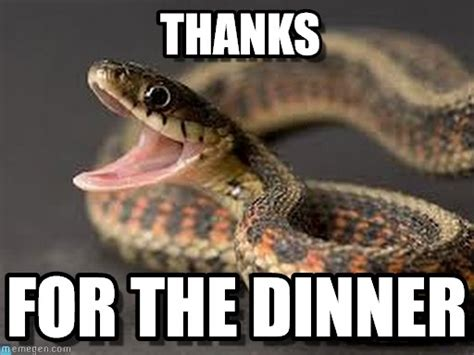 Snake Memes - 17 funny snake images and pictures