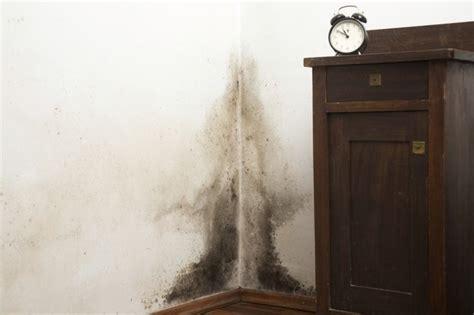 House   Musty Odor Hunker