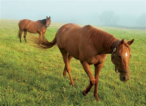 kentucky horse equine industry thoroughbreds horses breed every state florida quarter reins supreme farm breeding breeds taking farmflavor