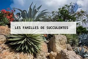 Plante Succulente Espèces Représentatives : plante succulente infos astuces entretien ~ Nature-et-papiers.com Idées de Décoration