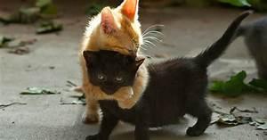 Hd, Katzen, Hintergrundbilder