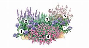Balkonkästen Bepflanzen Beispiele : trendige blumenk sten zum nachpflanzen zaubergl ckchen ~ Lizthompson.info Haus und Dekorationen
