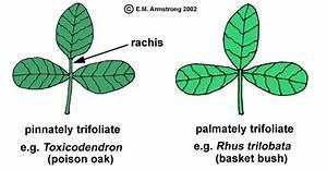 Leaf Terminology  Part 1
