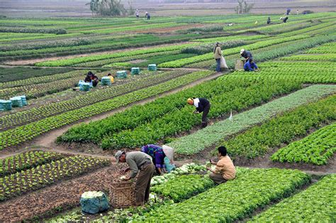agricultural equipment manufacturer in maldives agriculture in
