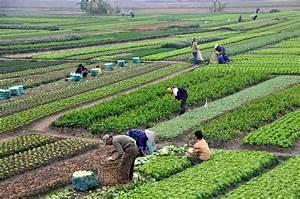 Agriculture in Vietnam - Wikipedia